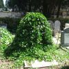 The covered tombstone